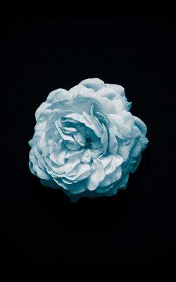 nm84-flower-center-blue-minimal-simple