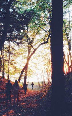 nm45-hiking-mountain-wood-sunset-nature