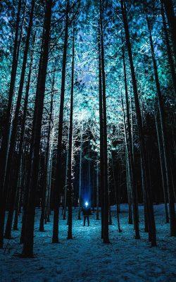 nn88-wood-mountain-nature-blue-night