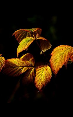 no32-fall-leaf-dark-nature