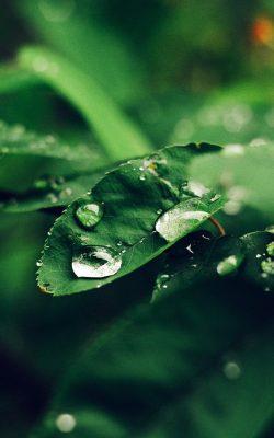nd38-leaf-rain-green-nature-forest-blue