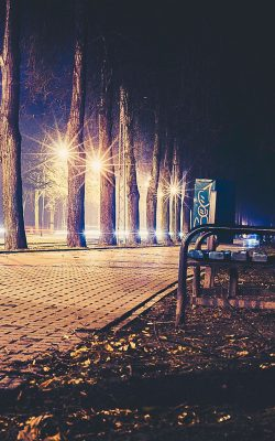 no43-street-night-bench-nature-dark