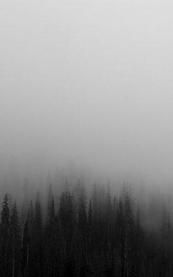 no61-fog-minimal-mountain-wood-nature