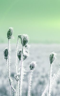 mt48-snow-cold-winter-flower-bokeh-nature-flare-green