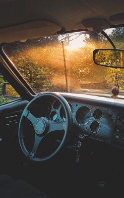 nv73-car-drive-forest-light-nature