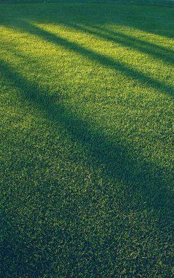 vj86-lawn-grass-sunlight-green-blue-pattern