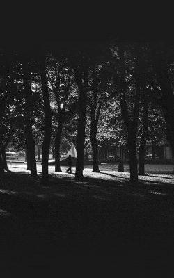 mo43-backyard-wood-dark-nature-in-city