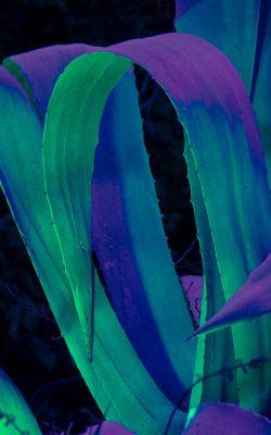wa09-leaf-blue-purple-green-flower-pattern-background