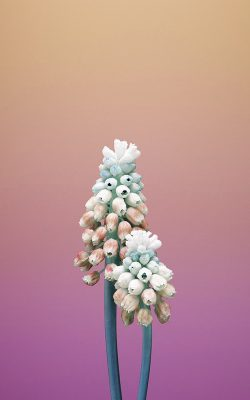 bb81-iphonex-apple-illustration-art-flower-pink