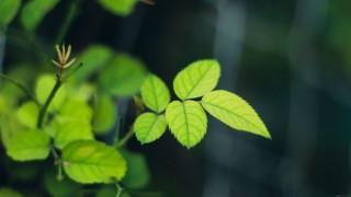Greenish wallpaper - i5yal