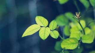 Greenish wallpaper - i5yal