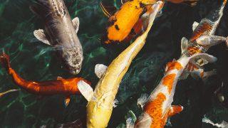 nm71-fish-water-animal-swim