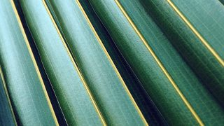 vq75-leaf-green-line-nature-pattern-blue