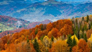 mr49-fall-mountain-fun-red-orange-tree-nature