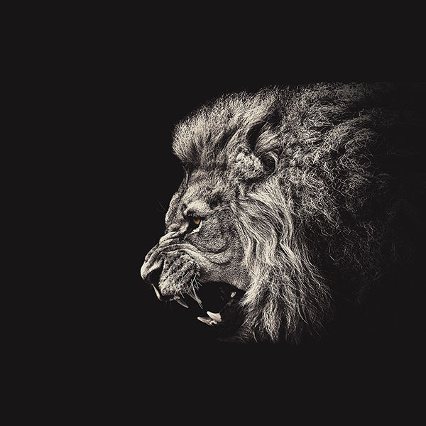 iPapers.co-Apple-iPhone-iPad-Macbook-iMac-wallpaper-aa65-shouting-lion-illust-art