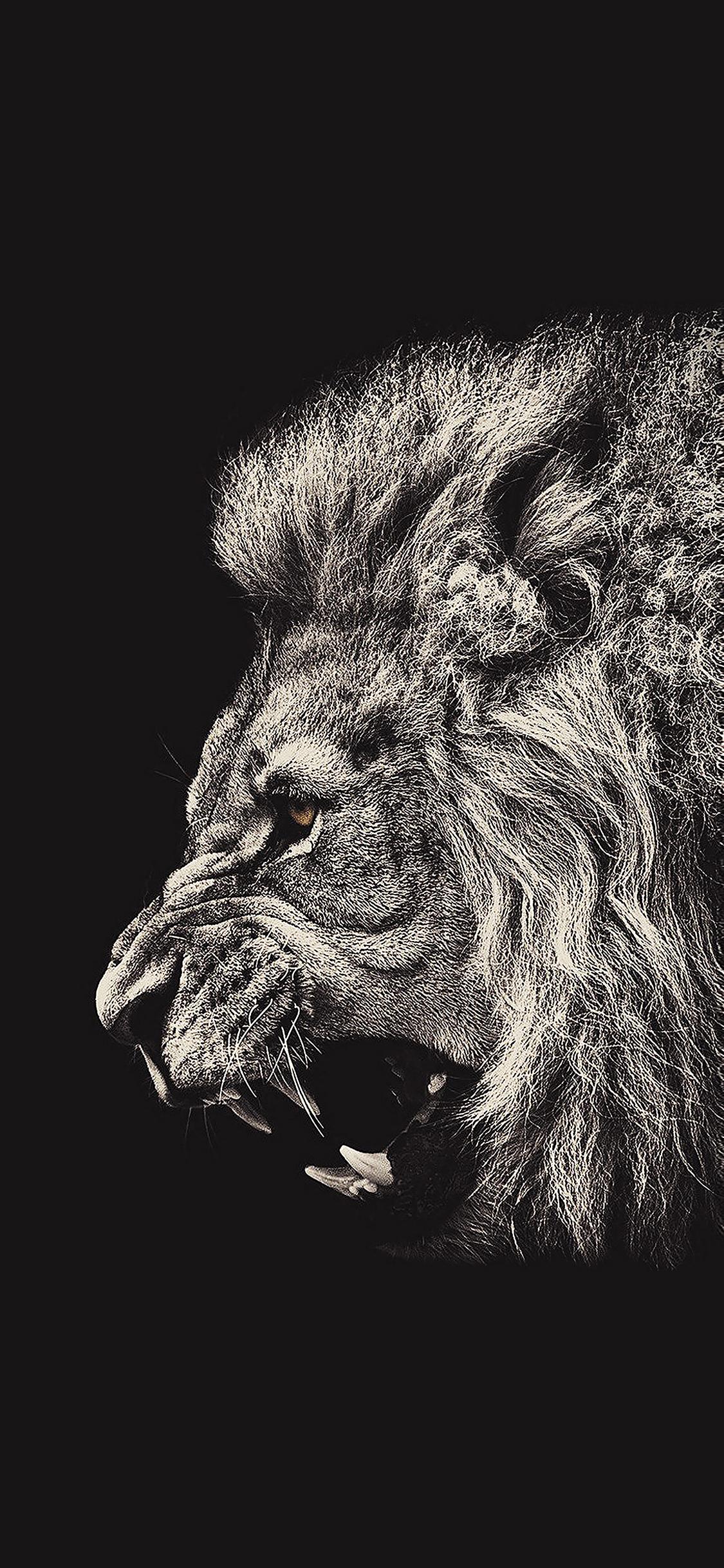 iPhoneXpapers.com-Apple-iPhone-wallpaper-aa65-shouting-lion-illust-art