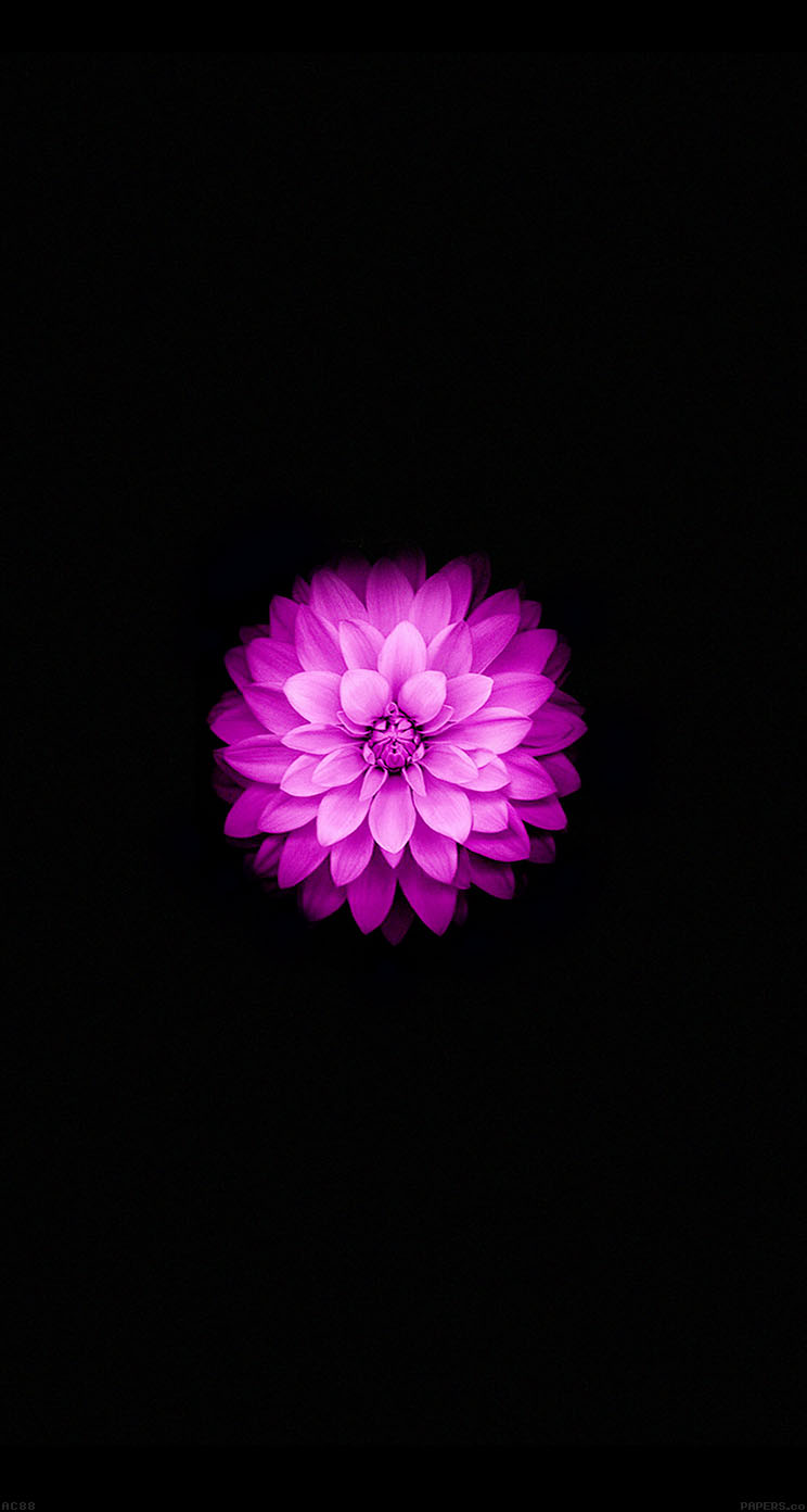 Iphone 6 - Iphone 6 flower wallpaper ...