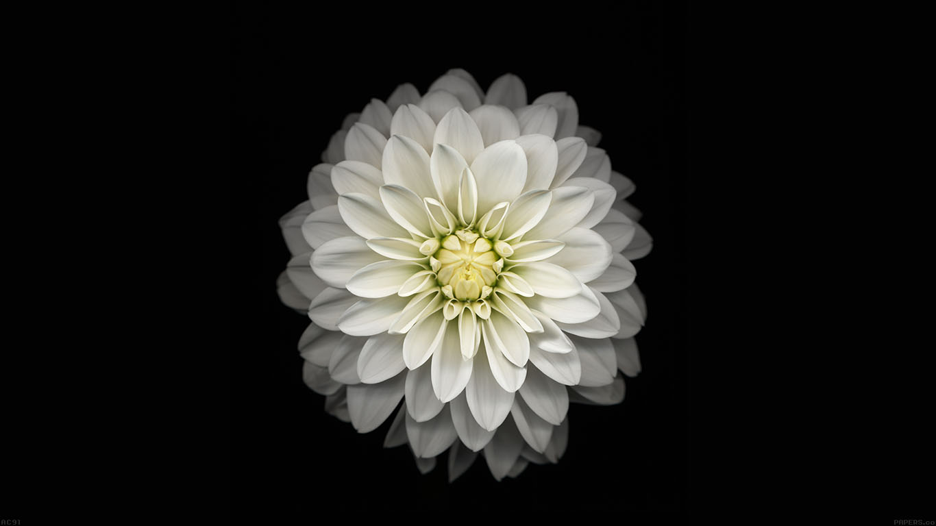 iPapers.co-Apple-iPhone-iPad-Macbook-iMac-wallpaper-ac91-wallpaper-apple-iphone6-plus-ios8-flower-white