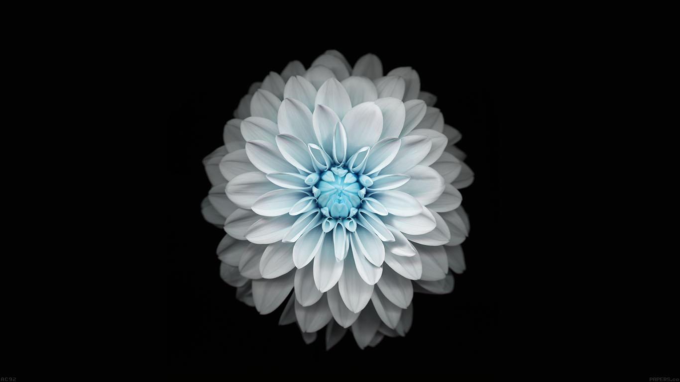iPapers.co-Apple-iPhone-iPad-Macbook-iMac-wallpaper-ac92-wallpaper-apple-iphone6-plus-ios8-flower-blue