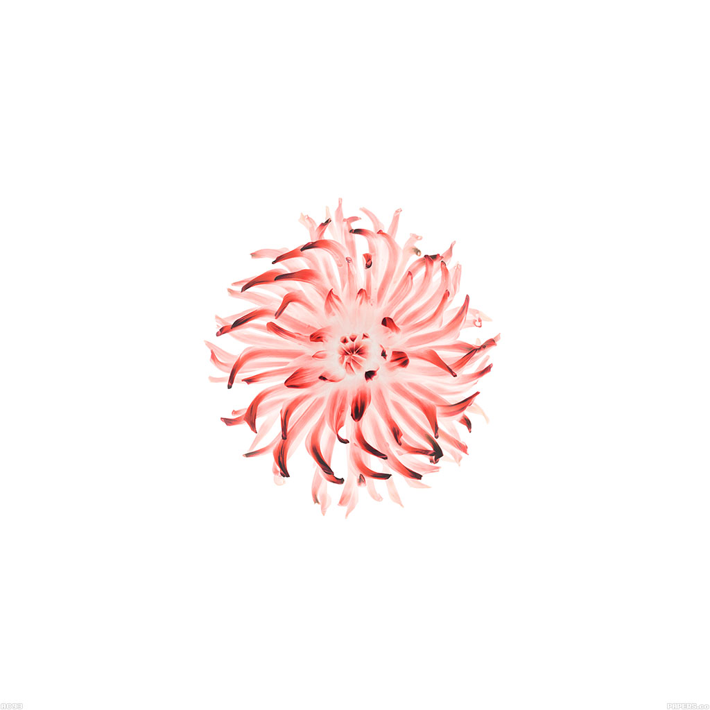 apple flower minimal