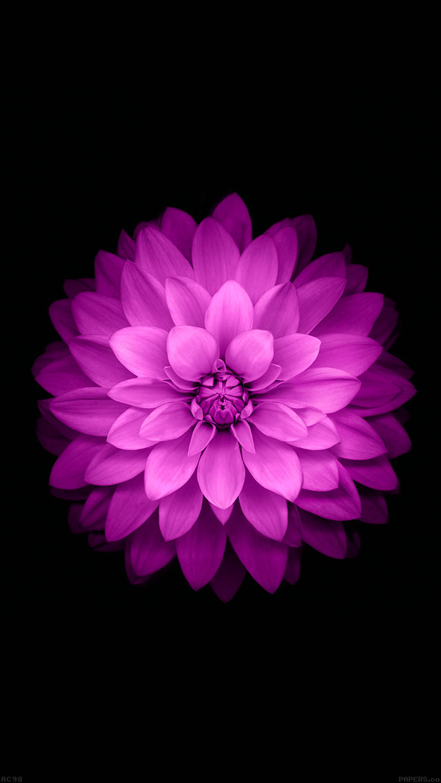freeios8.com-iphone-4-5-6-ipad-ios8-ac98-wallpaper-apple-red-lotus-iphone6-plus-ios8-flower