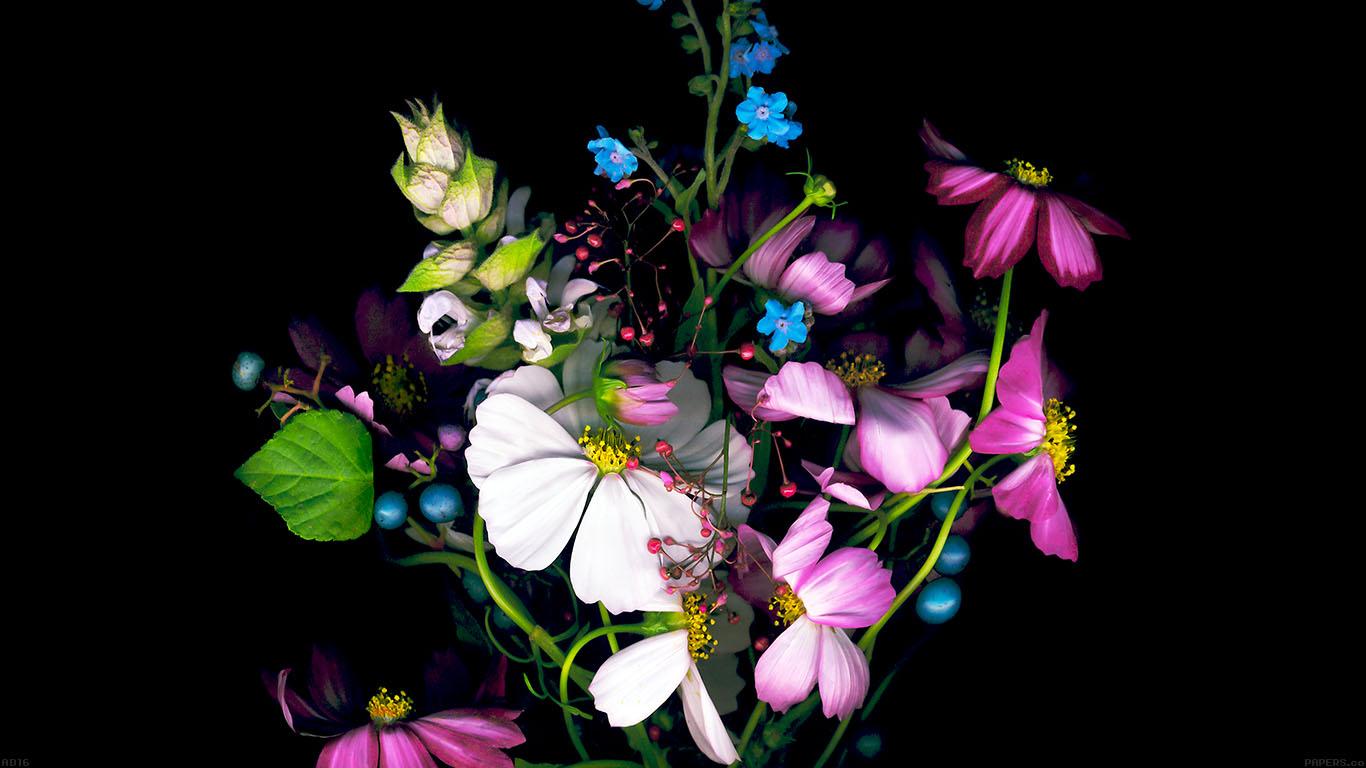 iPapers.co-Apple-iPhone-iPad-Macbook-iMac-wallpaper-ad16-wallpaper-apple-ios8-iphone6-dark-flower