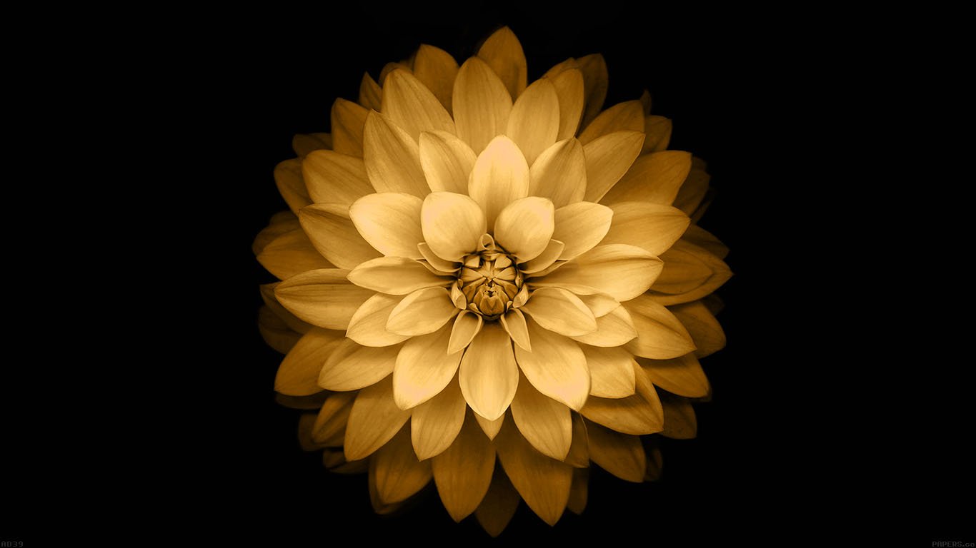 iPapers.co-Apple-iPhone-iPad-Macbook-iMac-wallpaper-ad39-apple-yellow-lotus-iphone6-plus-ios8-flower