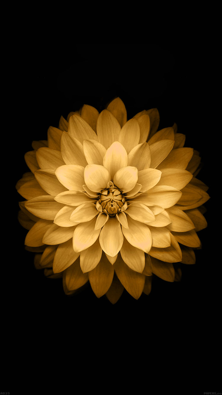 iPhonepapers.com-Apple-iPhone8-wallpaper-ad39-apple-yellow-lotus-iphone6-plus-ios8-flower