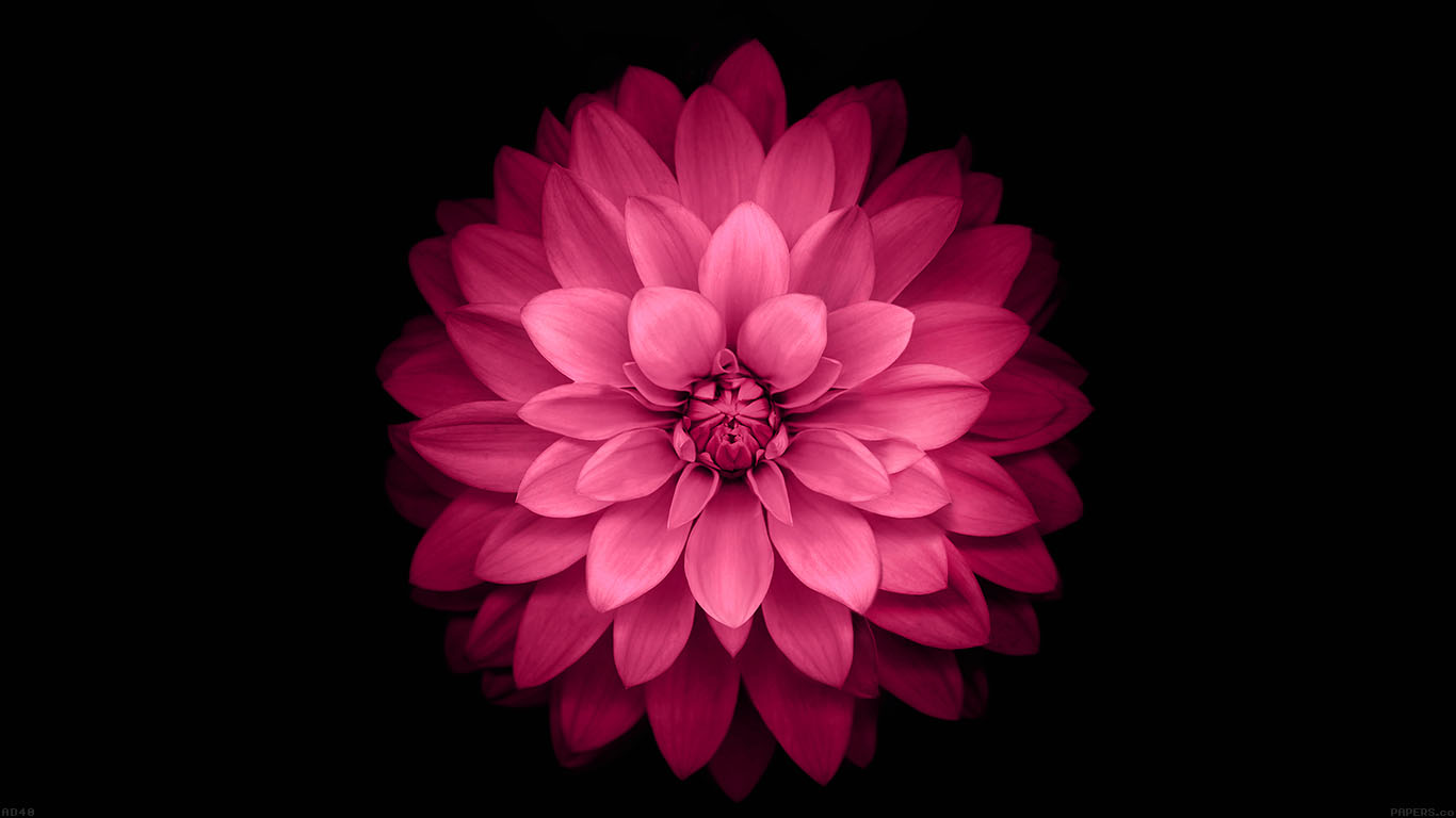 iPapers.co-Apple-iPhone-iPad-Macbook-iMac-wallpaper-ad40-apple-red-lotus-iphone6-plus-ios8-flower