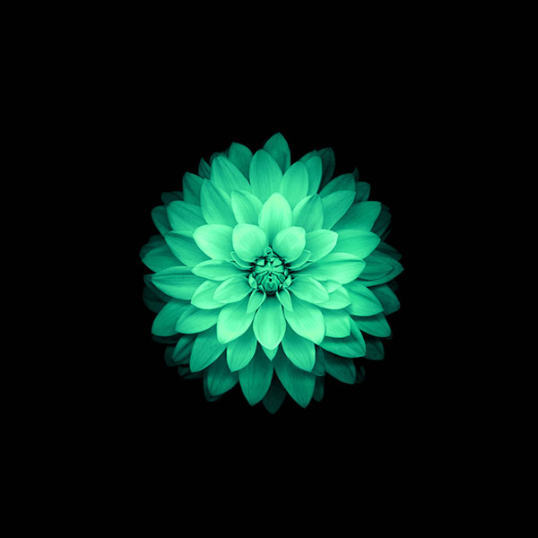 Ad76-apple-green-lotus-iphone6-plus-ios8-flower