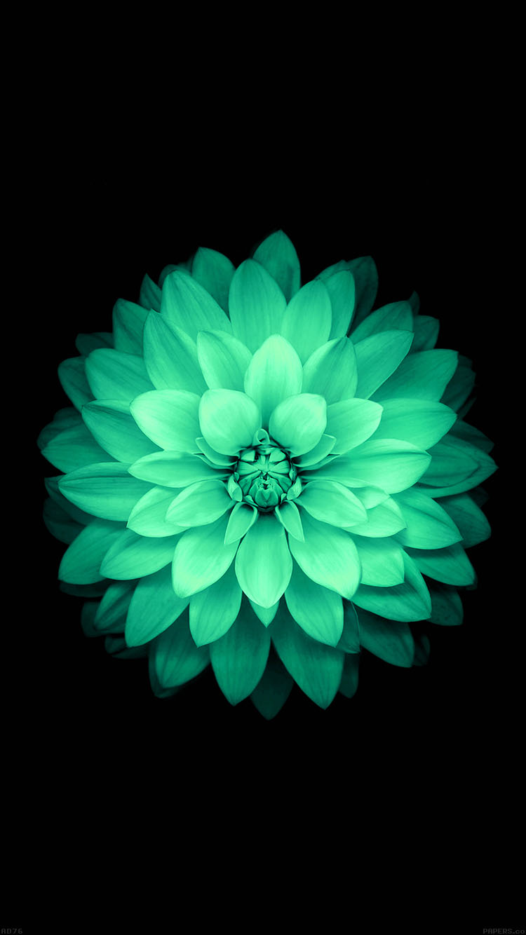 Ad76 Apple Green Lotus Iphone6 Plus Ios8 Flower