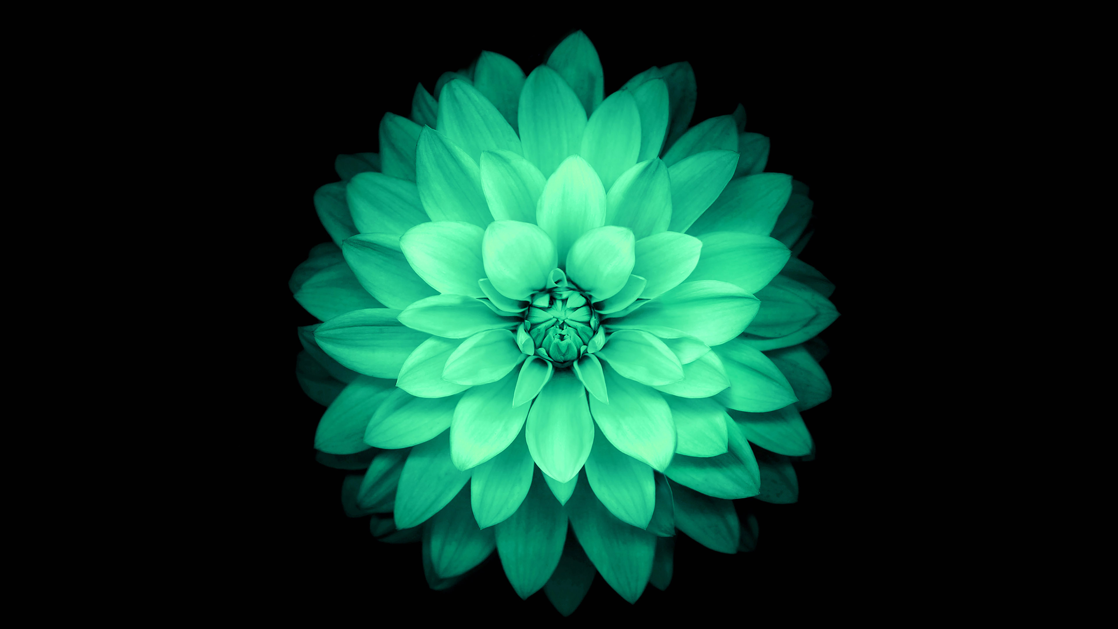 Ad76 Apple Green Lotus Iphone6 Plus Ios8 Flower Papers Co