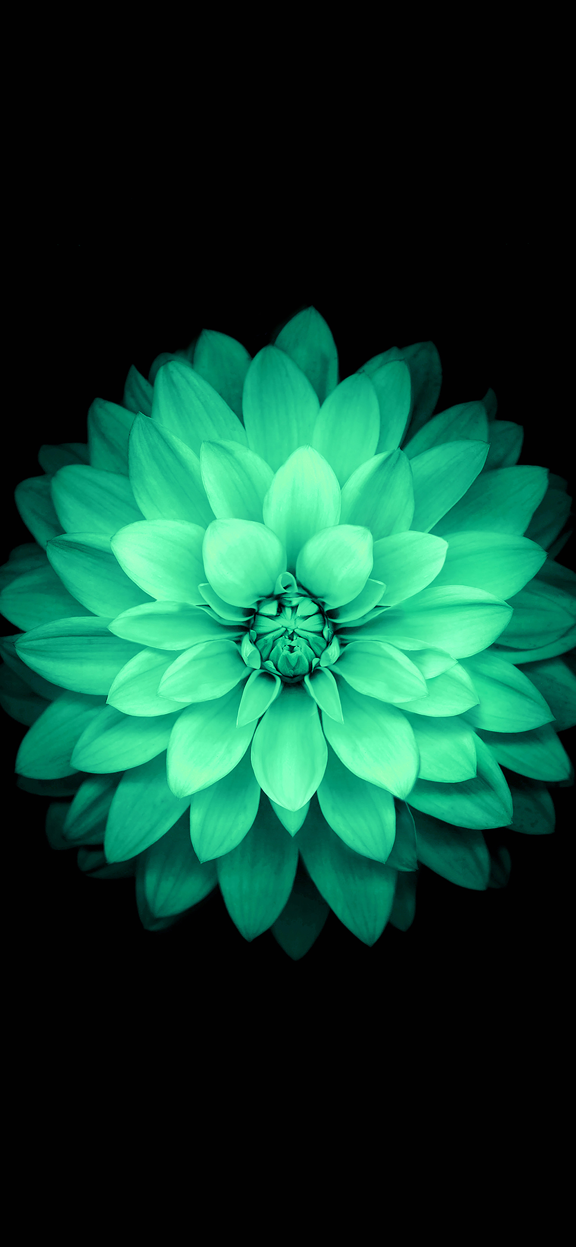 iPhoneXpapers.com-Apple-iPhone-wallpaper-ad76-apple-green-lotus-iphone6-plus-ios8-flower