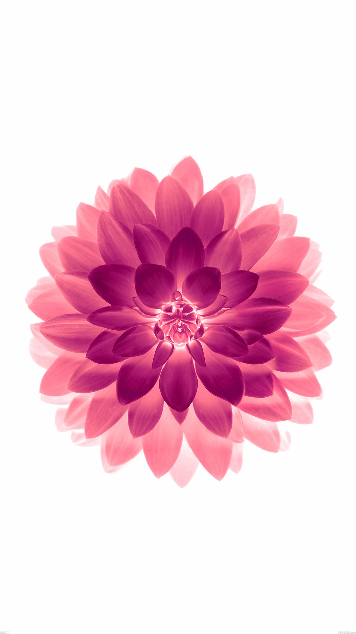 iphone flower wallpaper for iphone x iphonexpapers 1619