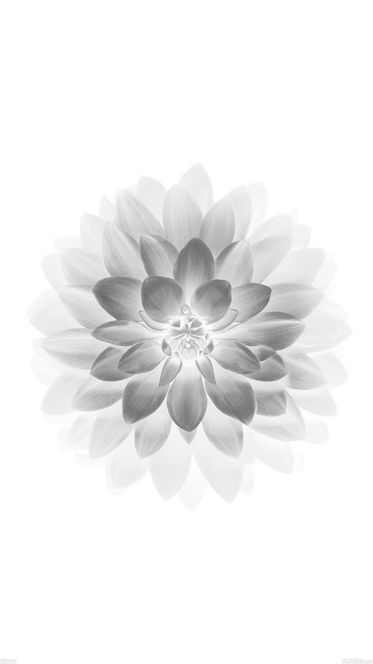 iPhone6papers.co-Apple-iPhone-6-iphone6-plus-wallpaper-ad78-apple-white-lotus-iphone6-plus-ios8-flower