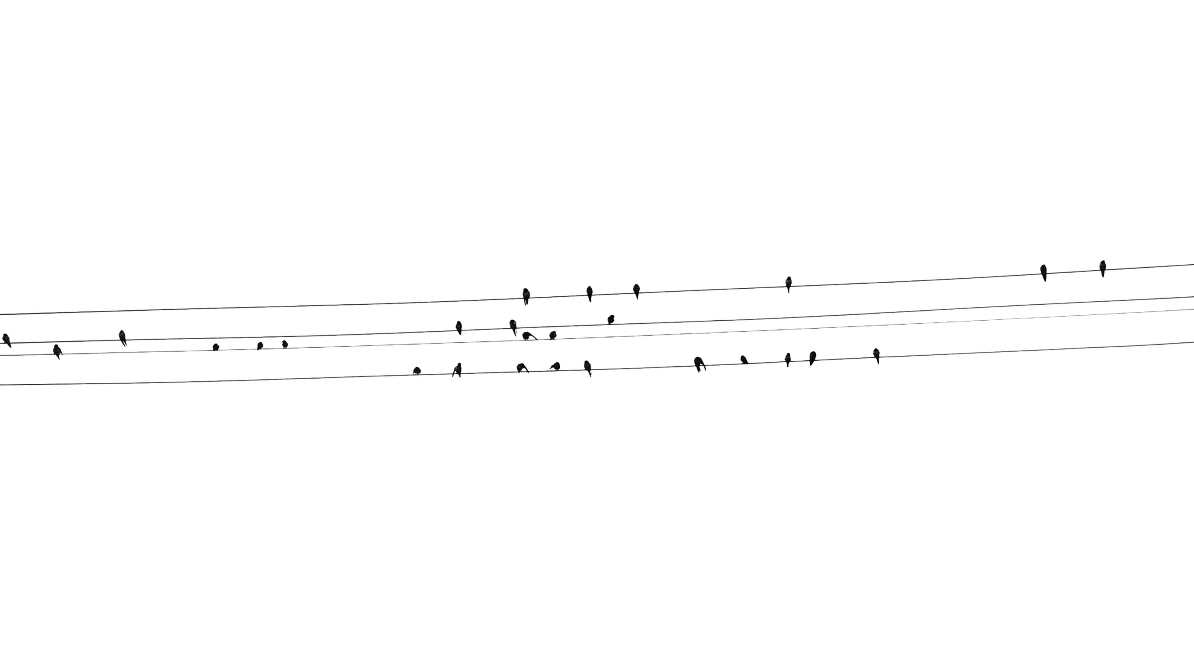 Desktoppapers Co Ad91 Birds Nature Minimal White