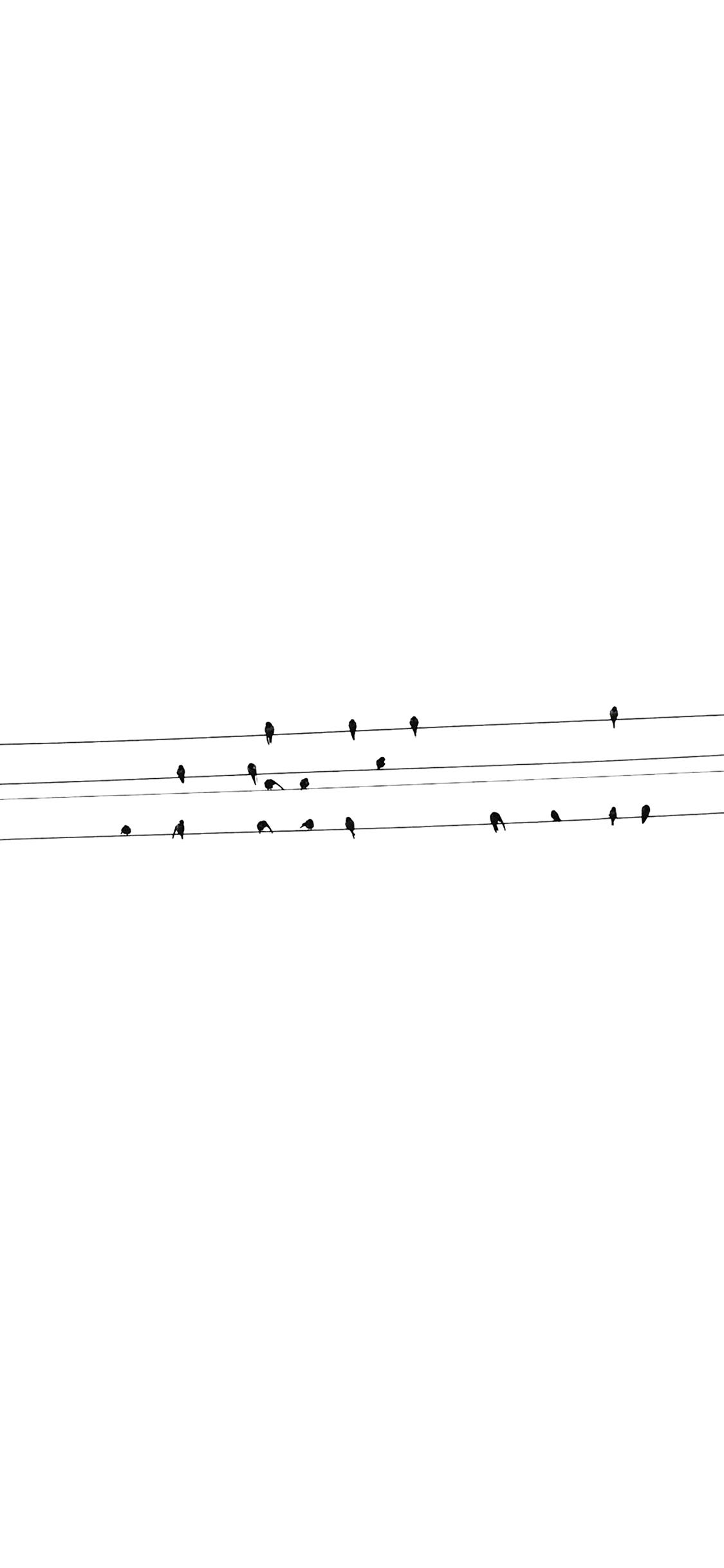 Ad91 Birds Nature Minimal White