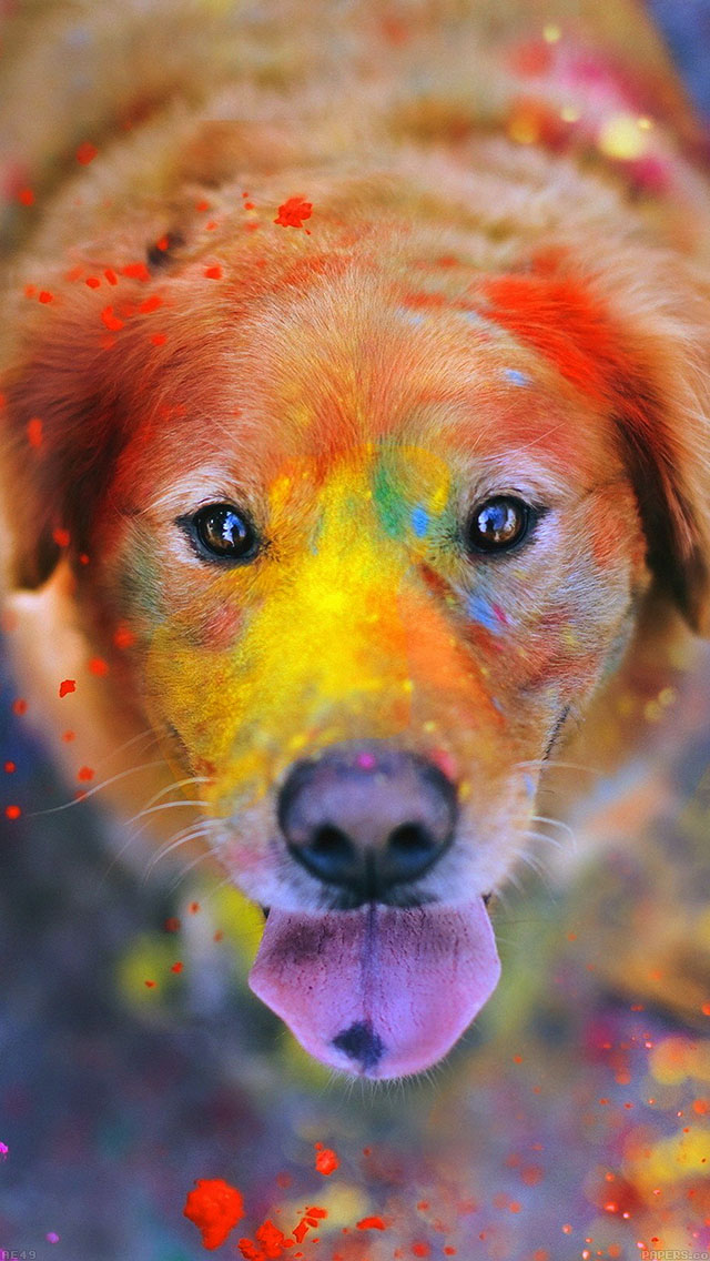 freeios8.com-iphone-4-5-6-ipad-ios8-ae49-dog-smile-fall-leaves-art-nature
