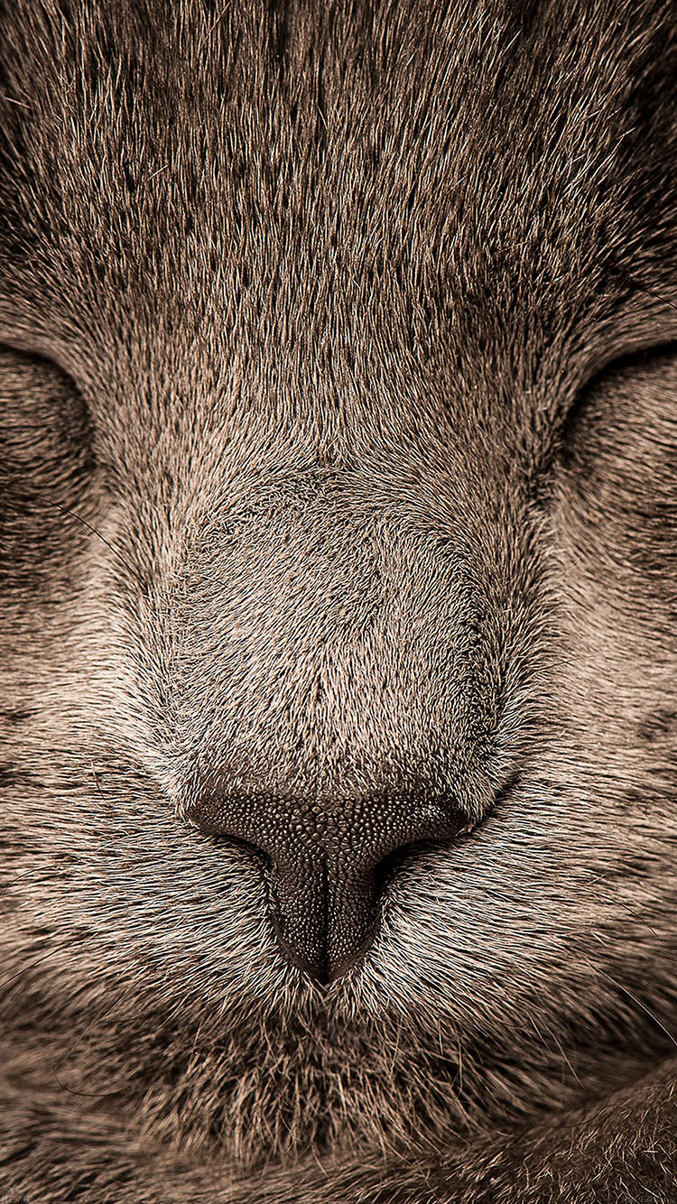 iPhone6papers.co-Apple-iPhone-6-iphone6-plus-wallpaper-ae78-sleeping-cat-zoom-nature