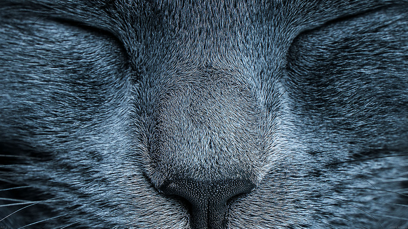 iPapers.co-Apple-iPhone-iPad-Macbook-iMac-wallpaper-ae79-sleeping-blue-cat-zoom-nature-wallpaper