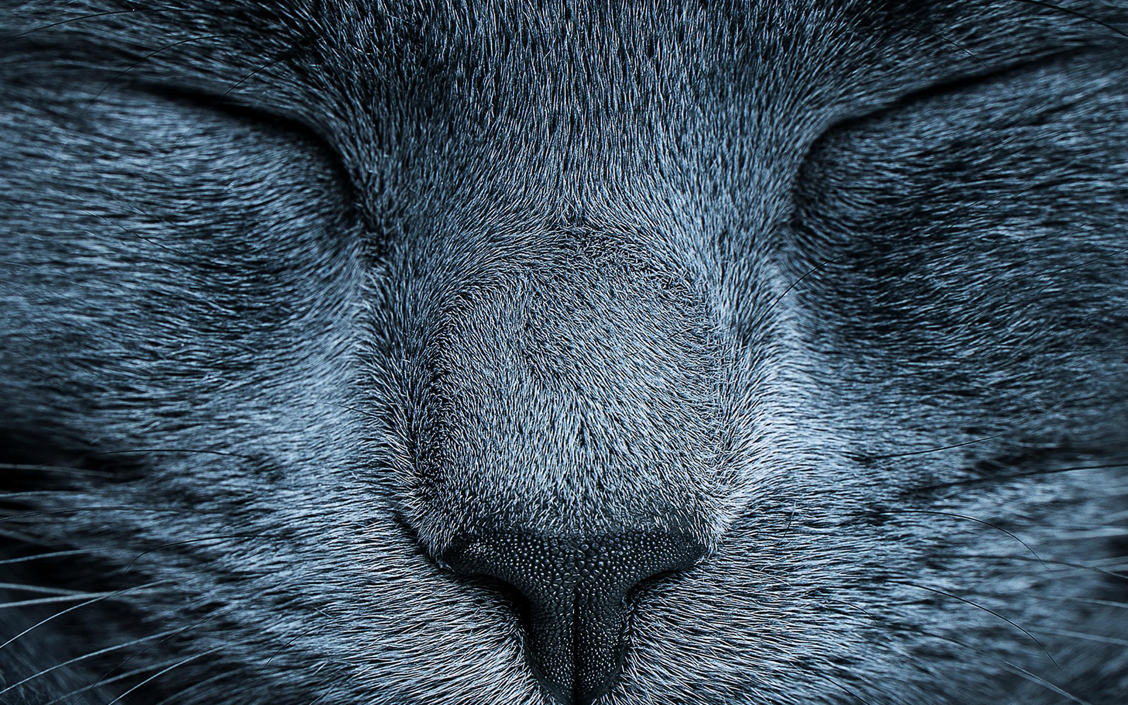 macbook retina winter wallpaper