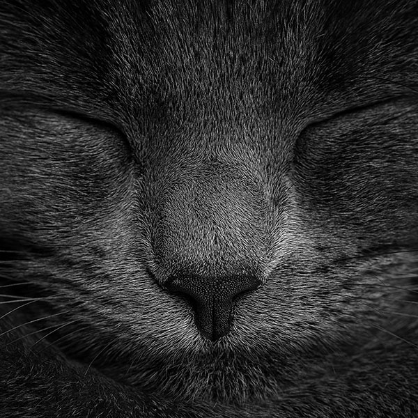 iPapers.co-Apple-iPhone-iPad-Macbook-iMac-wallpaper-ae80-sleeping-black-cat-zoom-nature-wallpaper