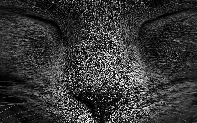 ae80-sleeping-black-cat-zoom-nature-wallpaper