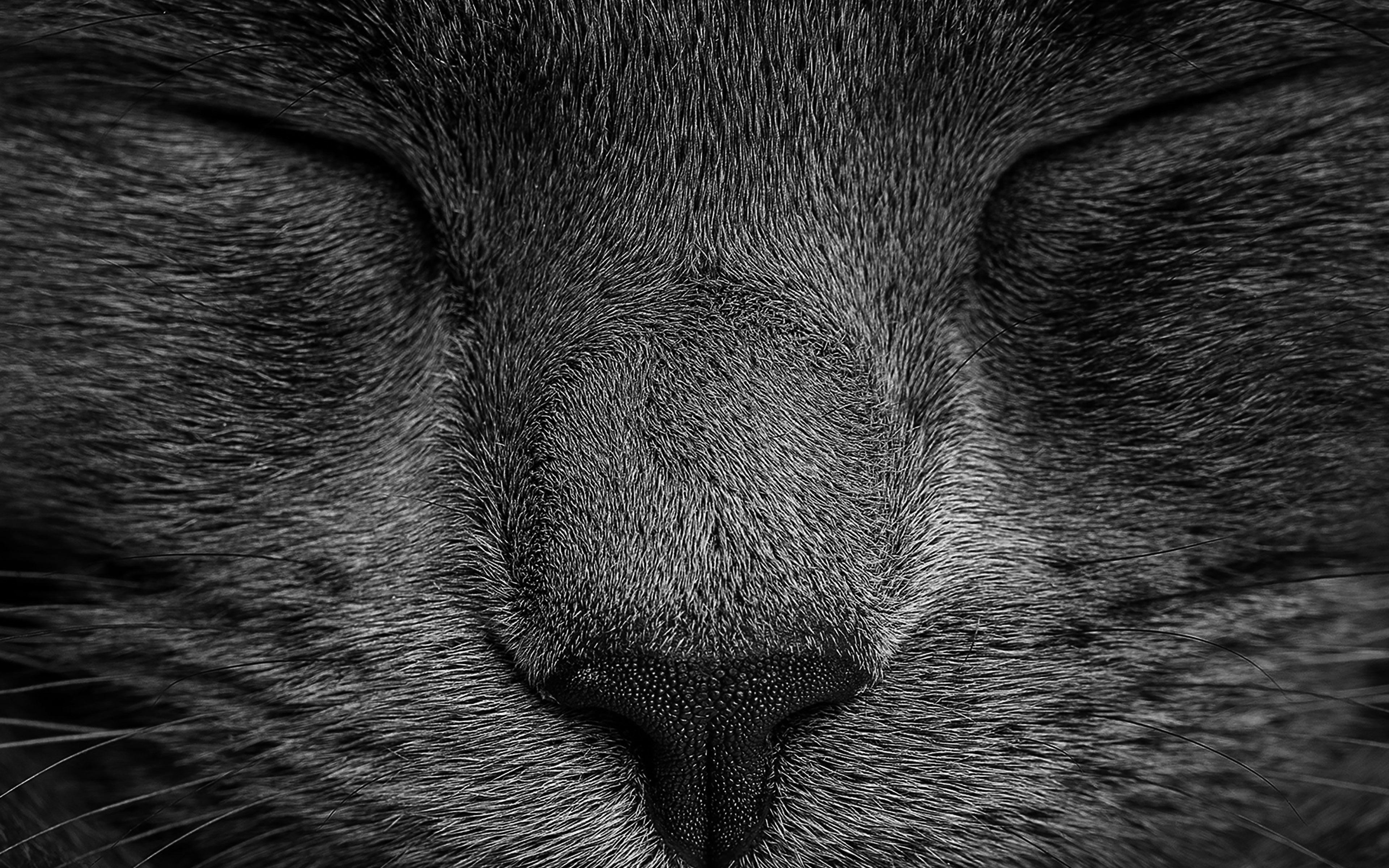 Ae80 Sleeping Black Cat Zoom Nature Wallpaper