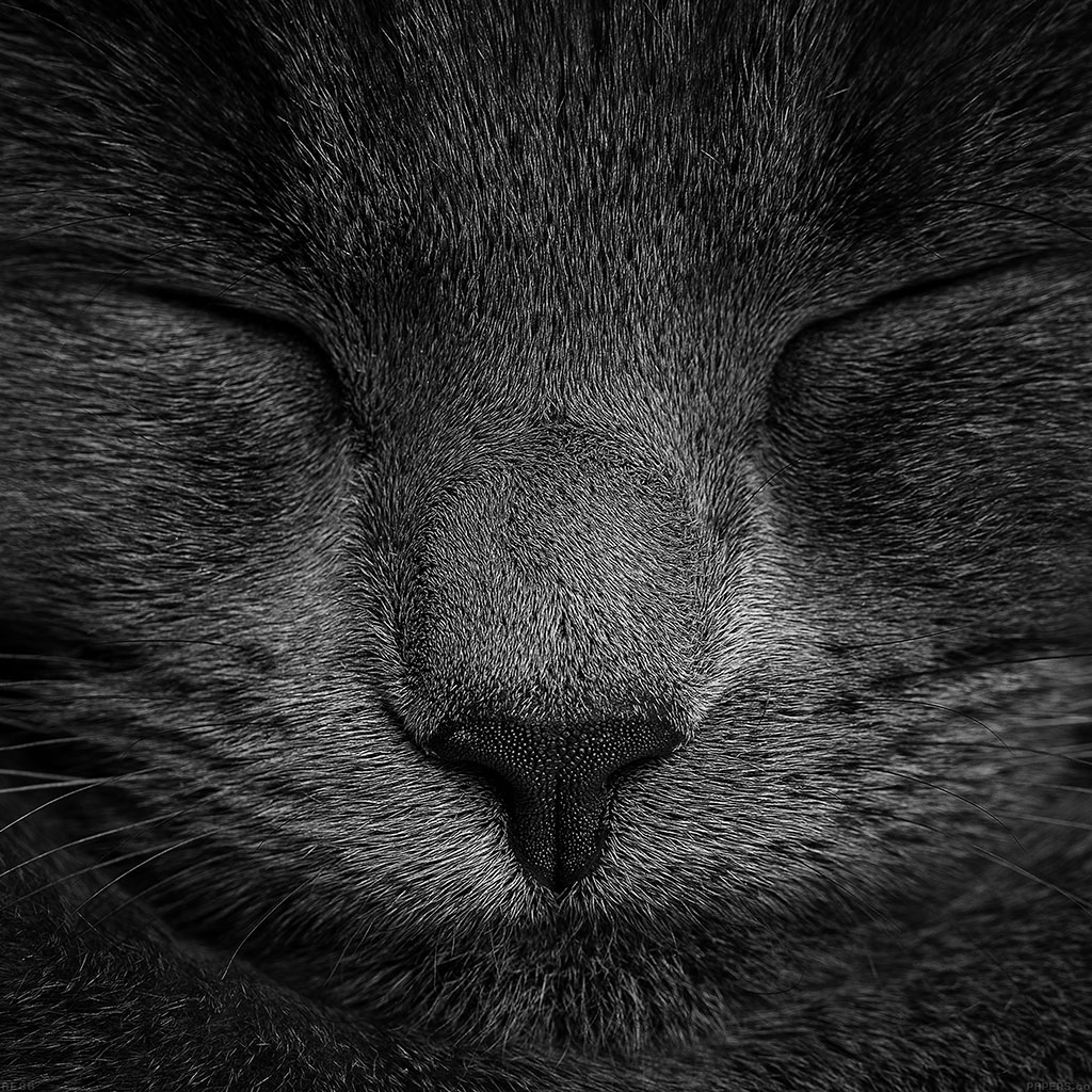 wallpaper-ae80-sleeping-black-cat-zoom-nature-wallpaper