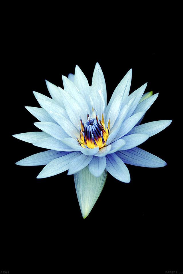 freeios7.com-iphone-4-iphone-5-ios7-wallpaperae88-dark-flower-xperia-z-background-iphone4