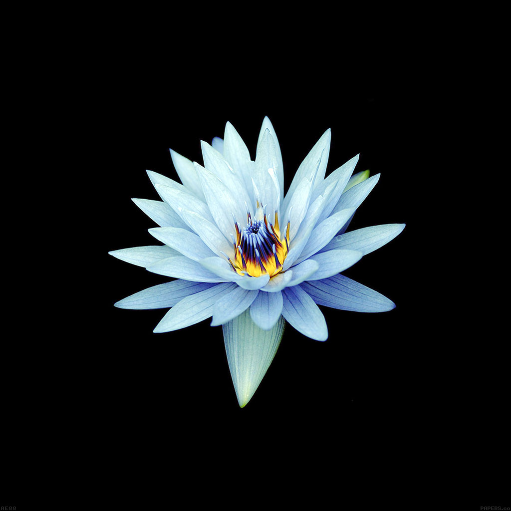 Ae88-dark-flower-xperia-z-background - Parallax