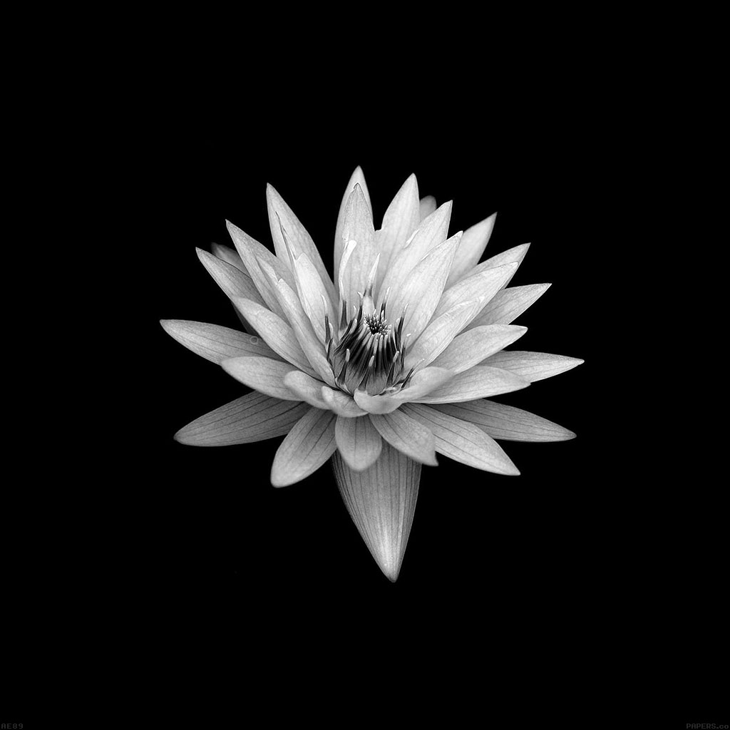 android-wallpaper-ae89-dark-flower-black-xperia-z-background-wallpaper