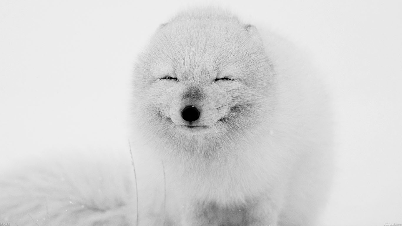 iPapers.co-Apple-iPhone-iPad-Macbook-iMac-wallpaper-af02-arctic-fox-happy-moment-wallpaper