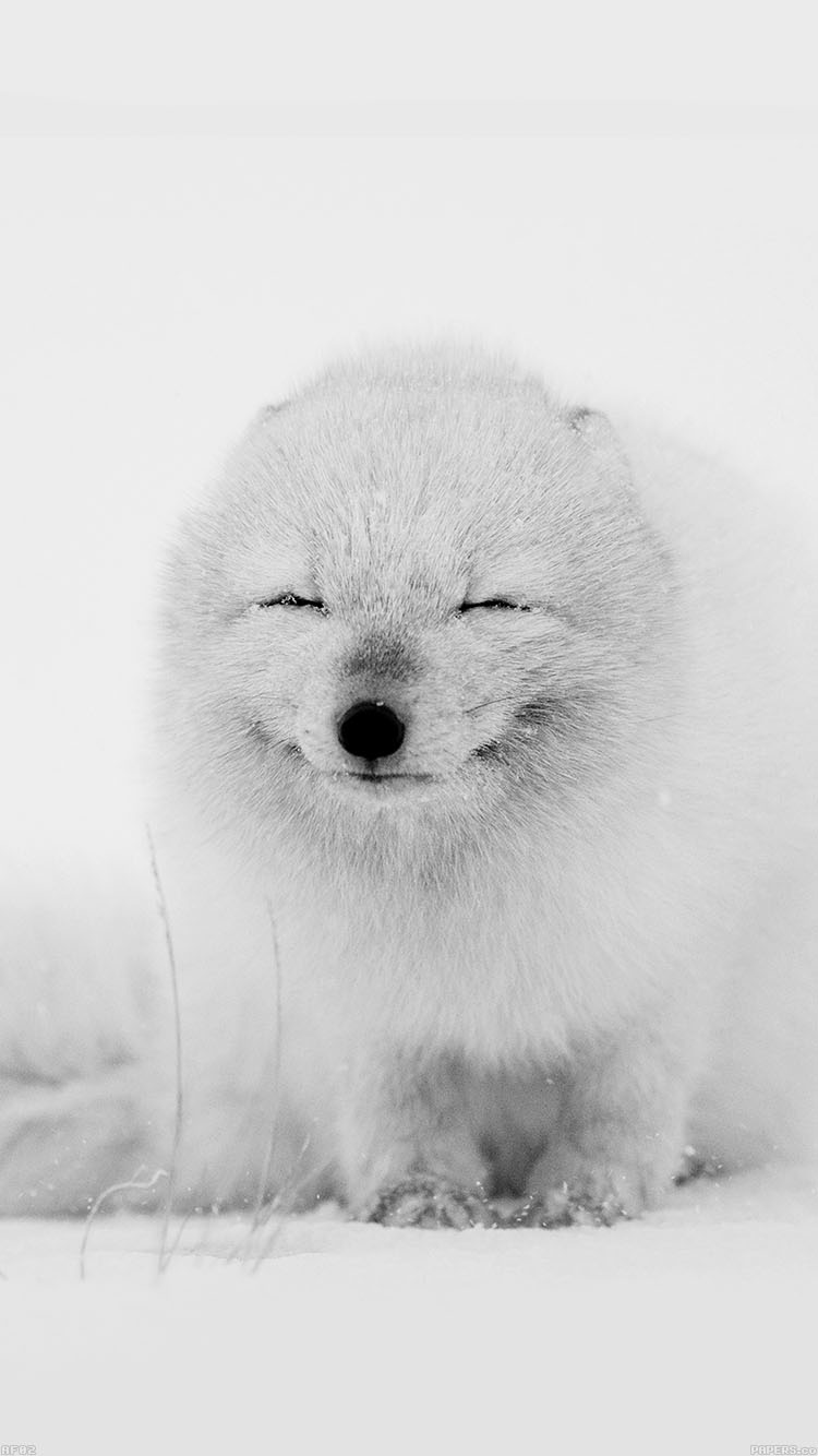 iPhone6papers.co-Apple-iPhone-6-iphone6-plus-wallpaper-af02-arctic-fox-happy-moment